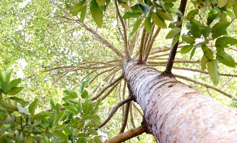 Estrutura e função das redes troncais