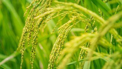 As características e classificação das plantas com sementes