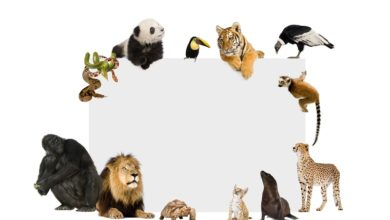 Distribuição da Fauna no Mundo - Smart Class