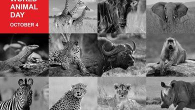 7 coisas que se tornam a base da classificação dos animais