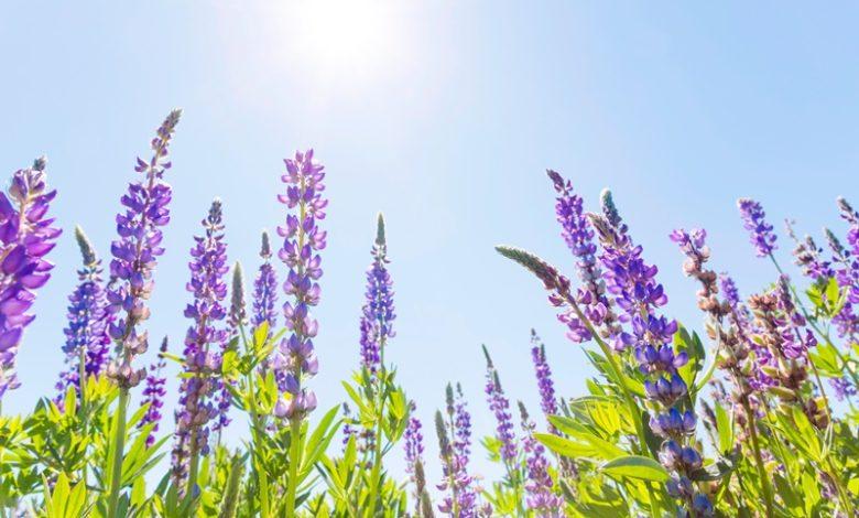 Conheça o agente de polinização das flores