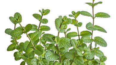 O que você sabe sobre tecidos protetores em plantas?